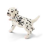 16839 Dalmatiner Puppy.