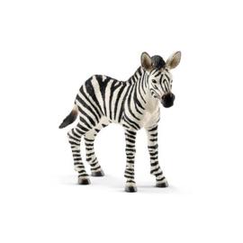 14811 Zebra veulen