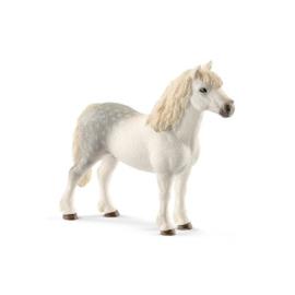 13871 Welsh Pony hengst