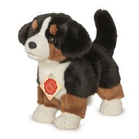 91930 Berner Sennenhond. puppy.