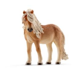 13790 Ijsland Pony merrie