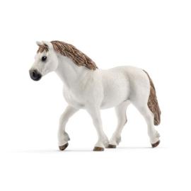 13872 Welsh Pony merrie