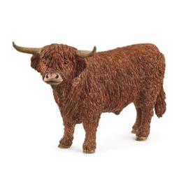 13919 Hooglander stier