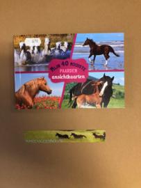 Paarden ansichtkaarten