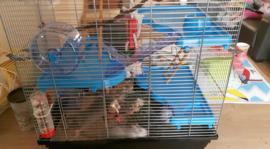 Hamsterkooi Gigant 2 blauw