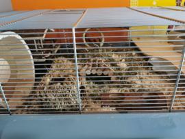 Hamsterkooi / muizenkooi Tommy grijs