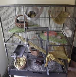 Voliere Noa, omgebouwd naar rattenkooi