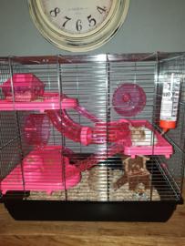 Hamsterkoo Homer roze