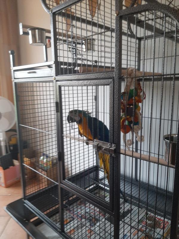 Papegaaienkooi Dubai