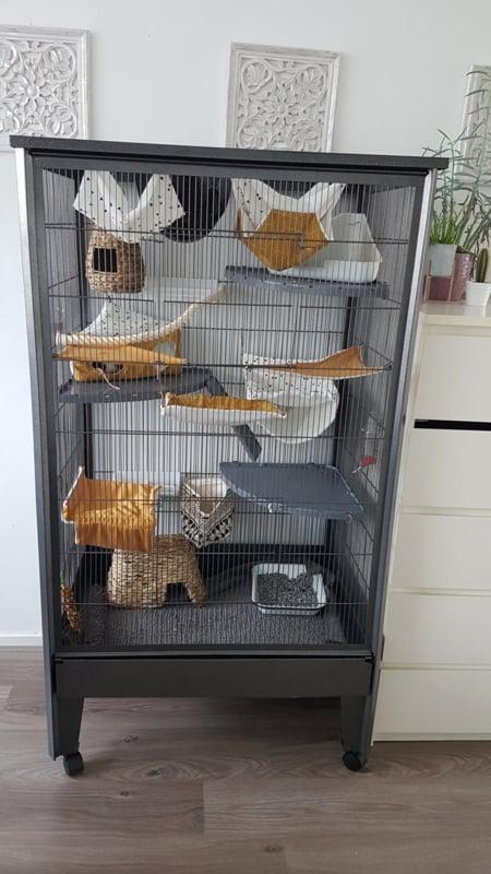 Rattenkooien / frettenkooi Housten 4