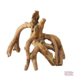 Mangrove Root 1