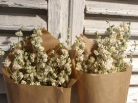 Gedroogde bloemen ridderspoor wit