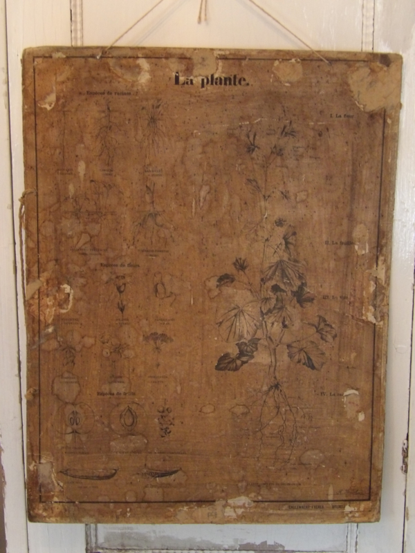 Antieke Franse schoolplaat