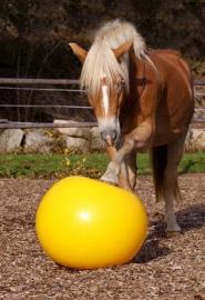 Trainingsbal