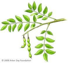 honingboom.jpg