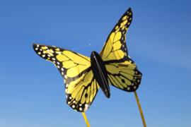 Bella Butterfly Yellow R2F