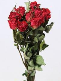 Gedroogde rozen boeket 45cm lang (30 bosjes van 10 rozentakken per bos)