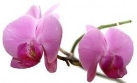 1 ltr. Opgietconcentraat Orchidee