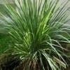 1 ltr. lemongrass opgiet