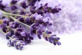 5 ltr. Lavendel belevingsgel