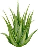 1liter Aloe Vera Opgietconcentraat