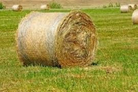 1 ltr. Opgietconcentraat Gemaaid Gras