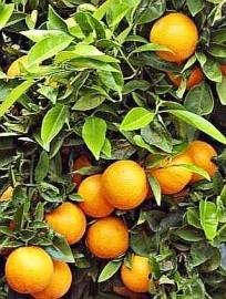 1 ltr. Sinaasappel zoet