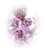 100 ml Seringen (parfum)
