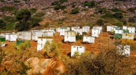Kretenzische biologische honing van  wilde tymbloemen en kruiden