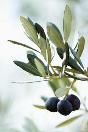 Bodybutter Aphrodite olijfolie, amandel en honing, zonder parabenen