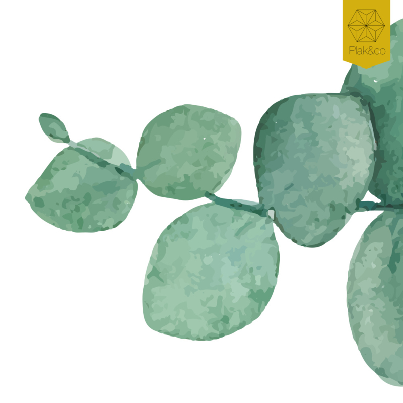 Raamfolie eucalyptus vorm