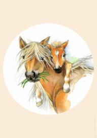 Poster  paard met veulen