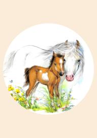 Poster  veulen met paard