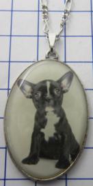 Ketting met verzilverde hanger hond HAN518