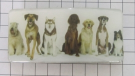 Haarspeld rechthoek verschillende hondenrassen tezamen HAR501
