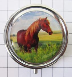 PIL 391 rood bruin paard pillendoosje