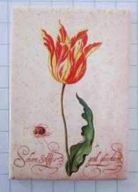 koelkastmagneetoude tulp rijksmuseum MAC:20.116