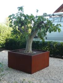 CorTenstaal plantenbak 'Robuste' 2000x2000x400mm