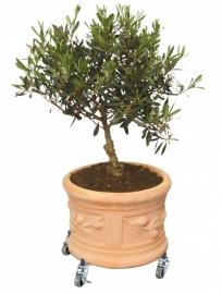 Plantentrolley `Florence` D32-47 cm. Belastbaar tot 100 kilo.