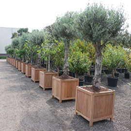 Hardhouten plantenbak `South Beach`  600 x 600 x 600mm