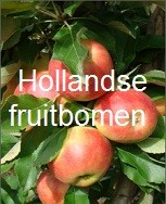 hollandsefruitboom.jpg