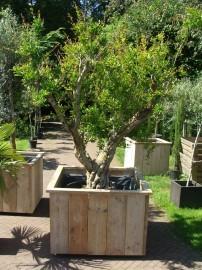 steigerhoutenplantenbaksfeer.jpg