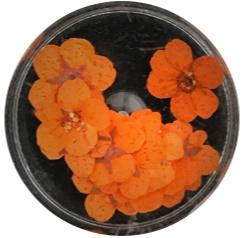dried flower oranje 10 stuks