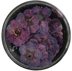 dried flower paars 10 stuks