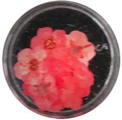 dried flower rood 10 stuks