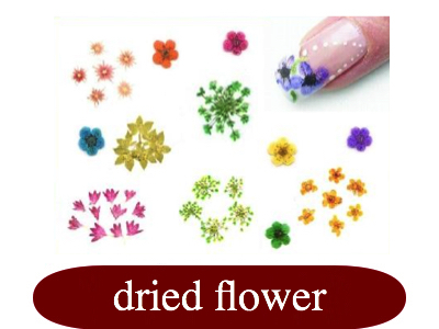 dried flower.jpg