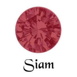 MC Rose VIVA SS5 Siam