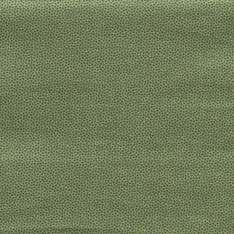 Dutch Heritage DHER 1503 Pindot Holly
