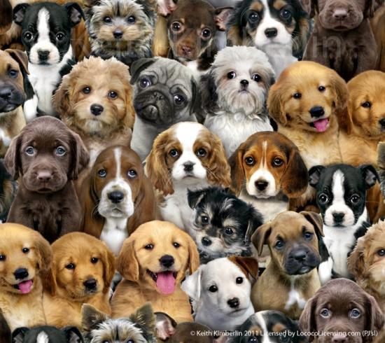 Quiltstof met afbeelding van verschillende hondenrassen 3800
