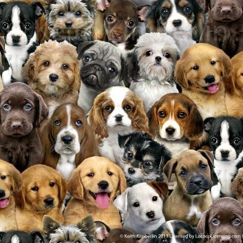 Blog...Nieuw binnen - verschillende hondenrassen op stof